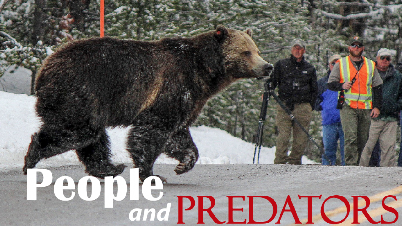 people and predators